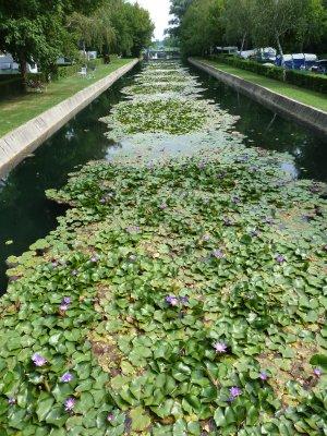Kämpingut läbiv kanal siniste vesiroosidega
